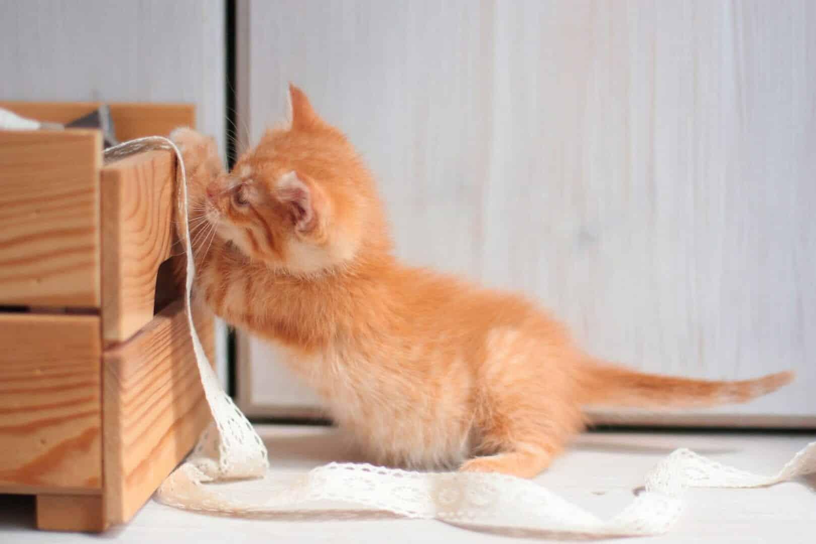 kitten safety