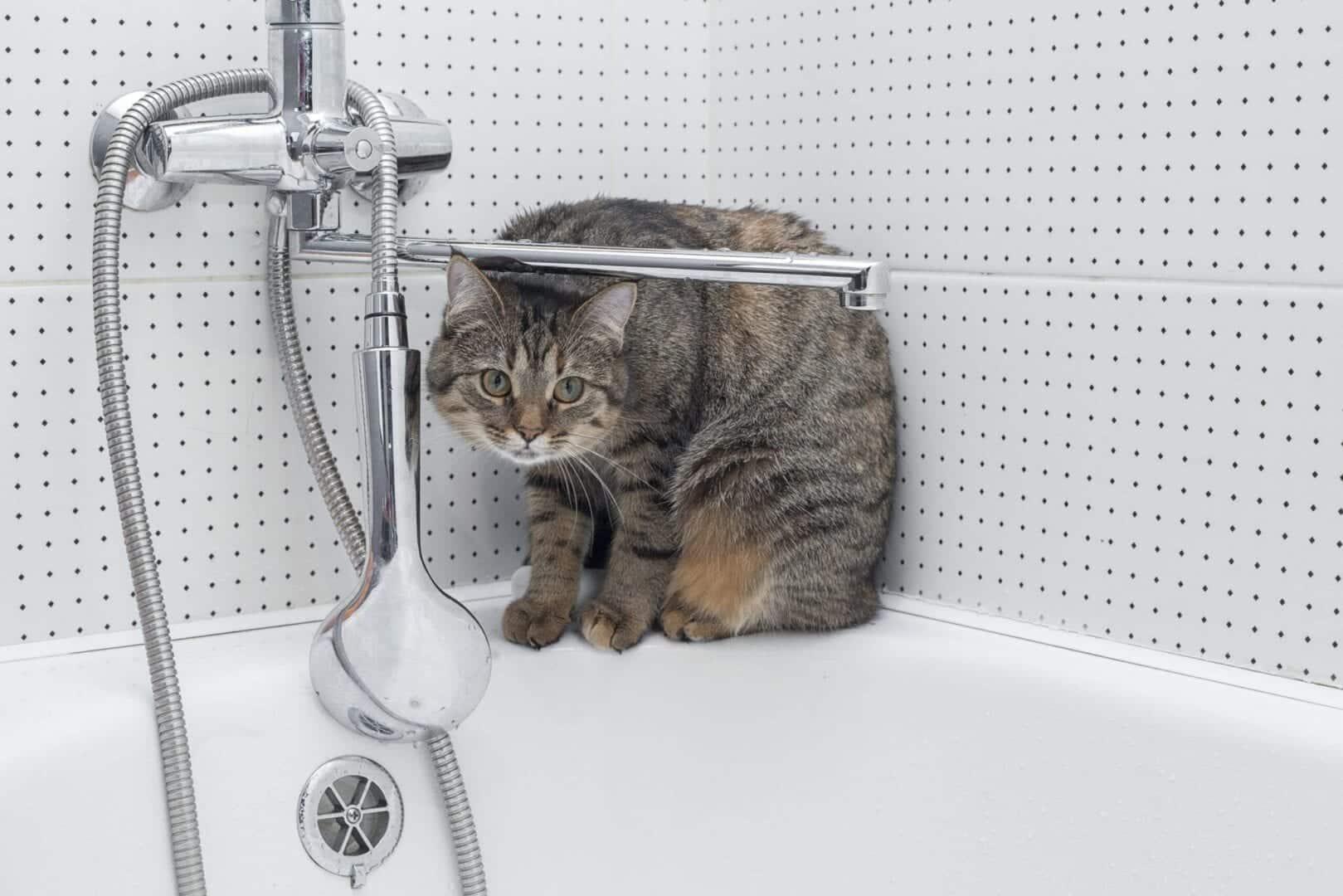 poop in tub
