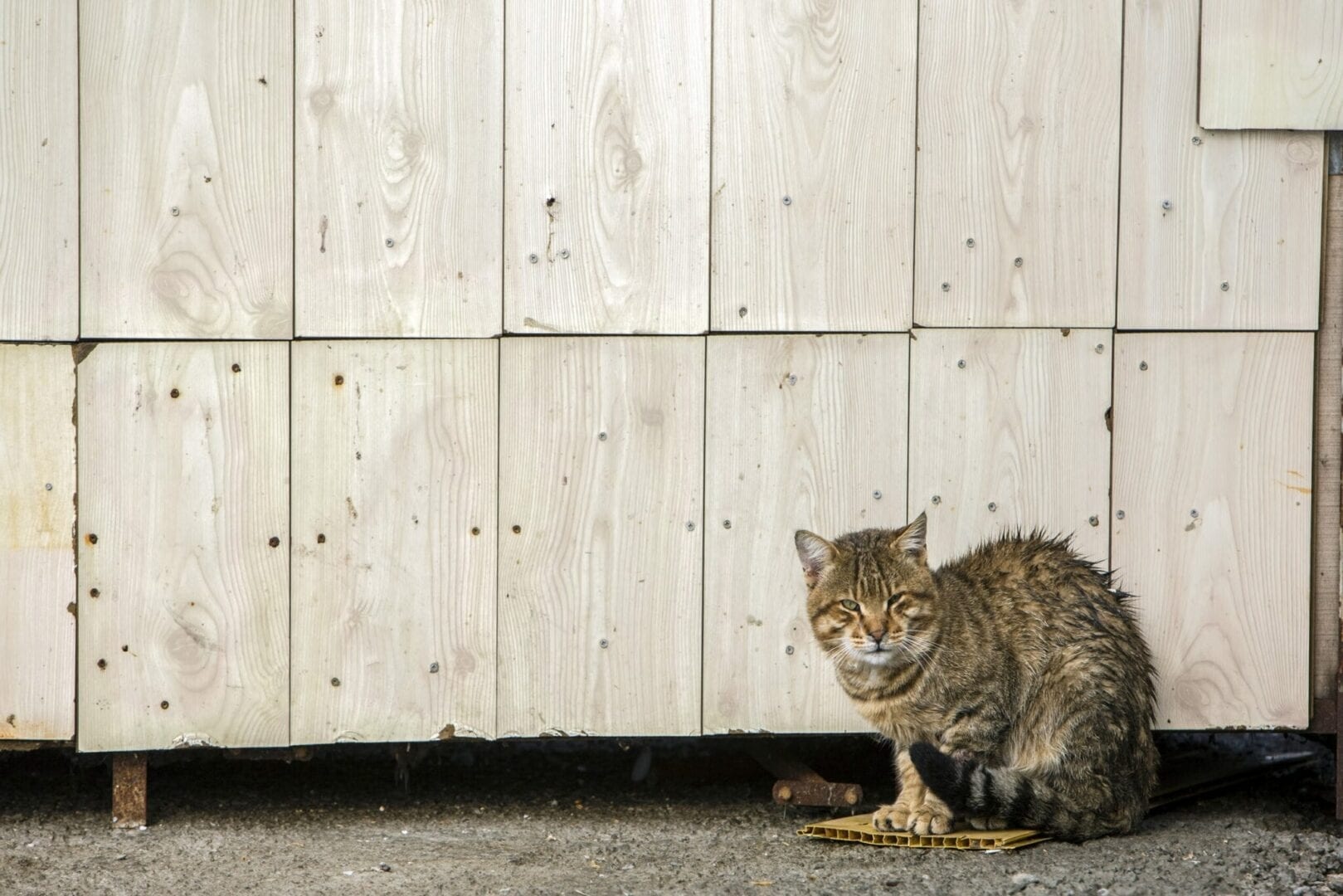 transition an outdoor cat to an indoor cat