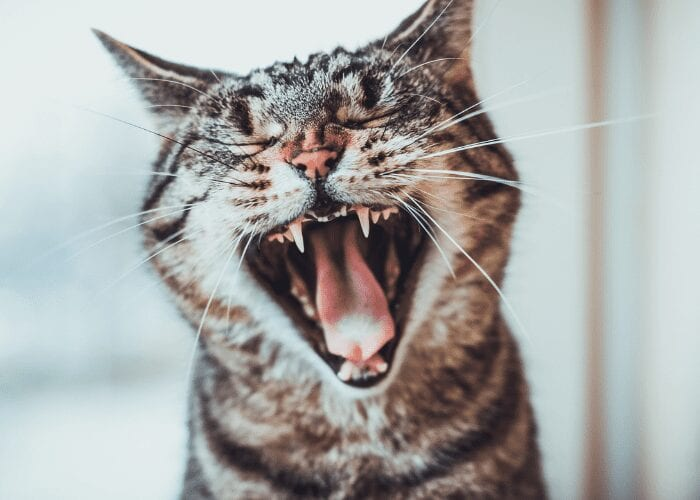 why does my cat's breath smell like fish?
