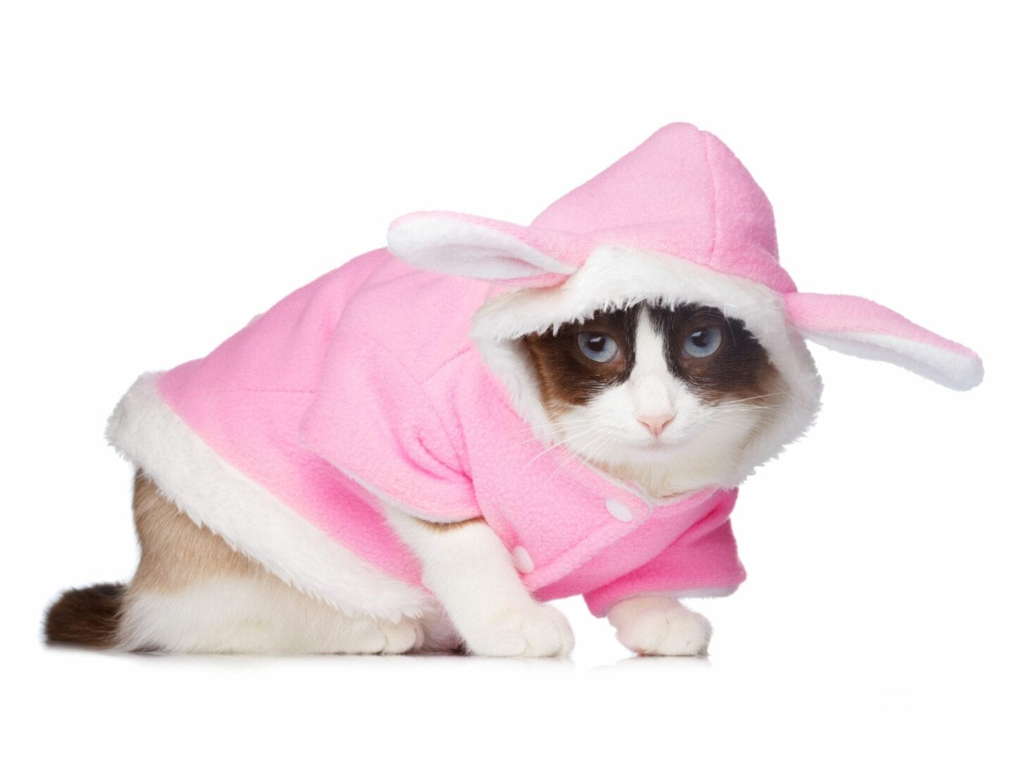 why do cats hate clothes?