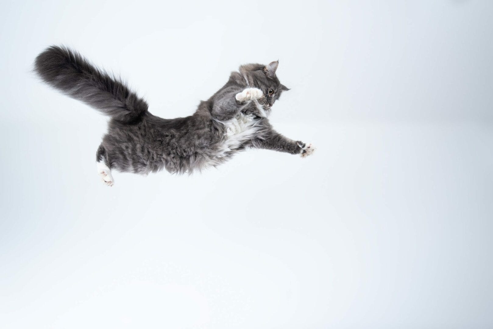 cats always land on their feet