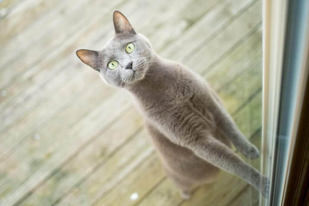 do cats understand humans?
