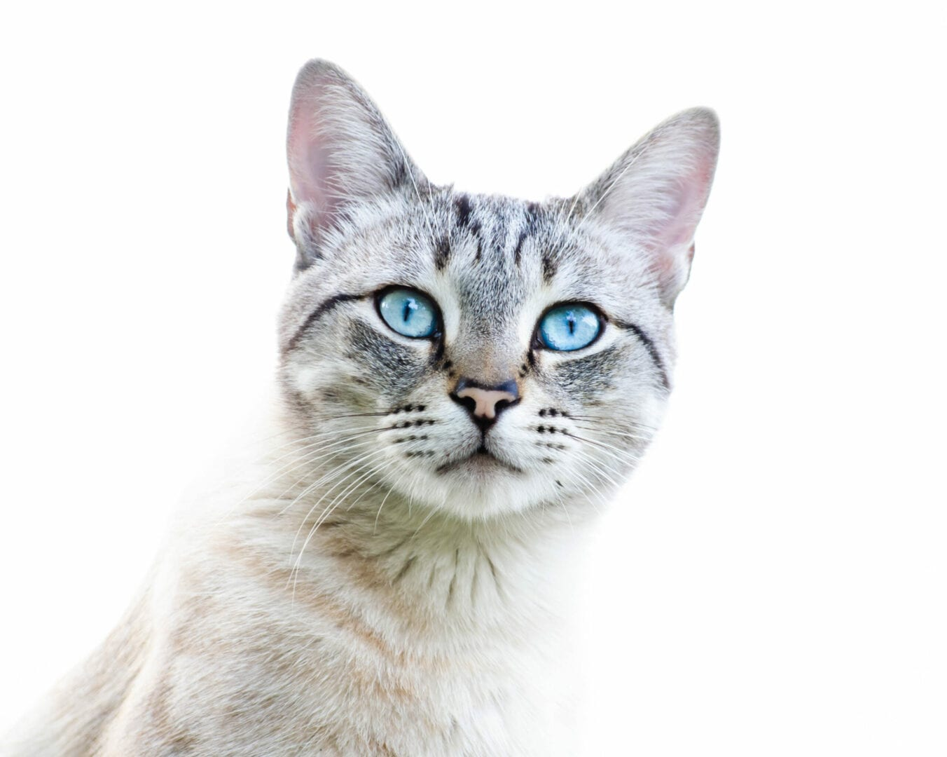 cat legends from around the world