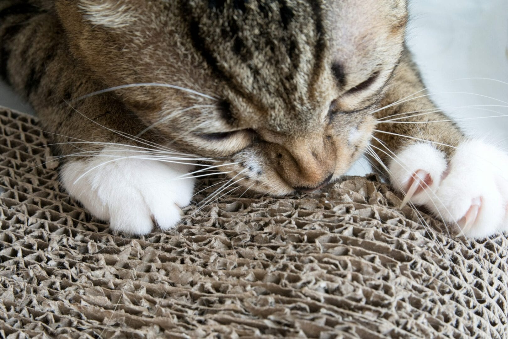 cat to use a scratching post
