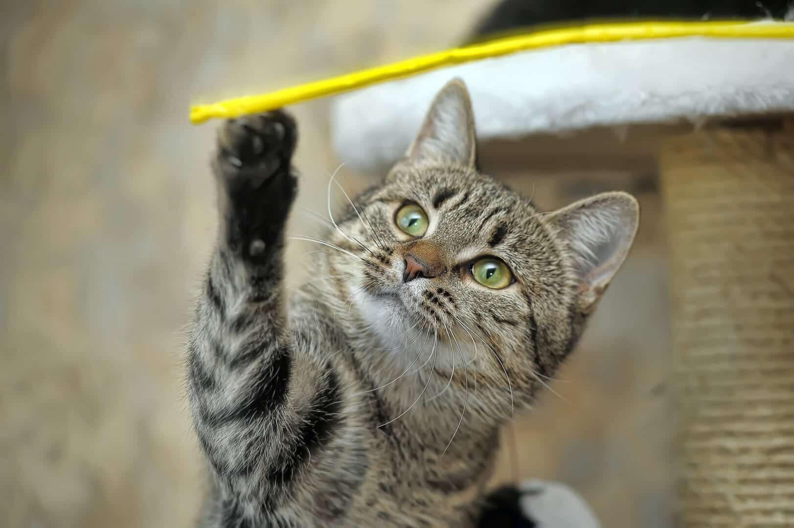 cat-like reflexes