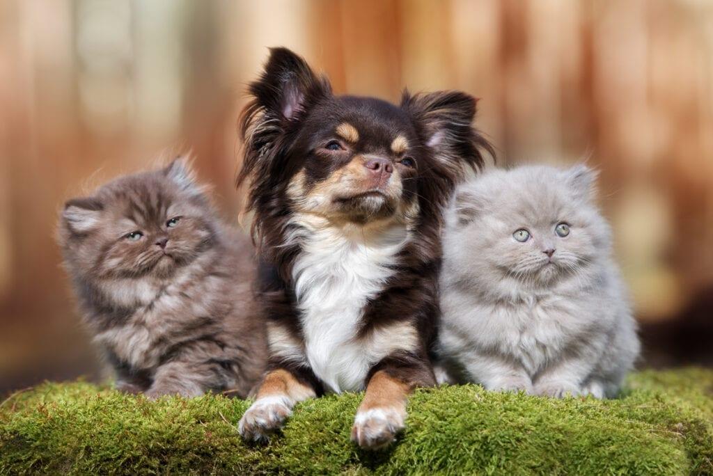 cat-friendly dog breeds