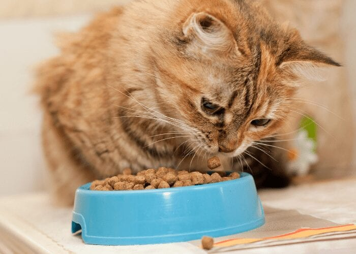 cats play with their food