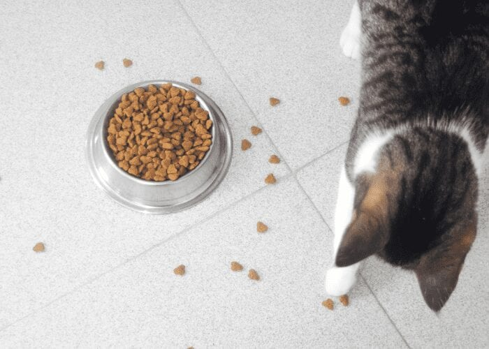 cat play with their food