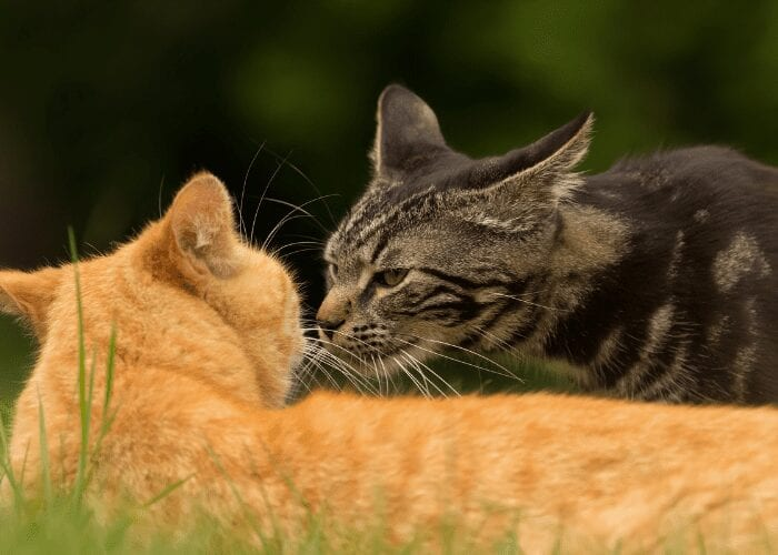why do cats smell each other
