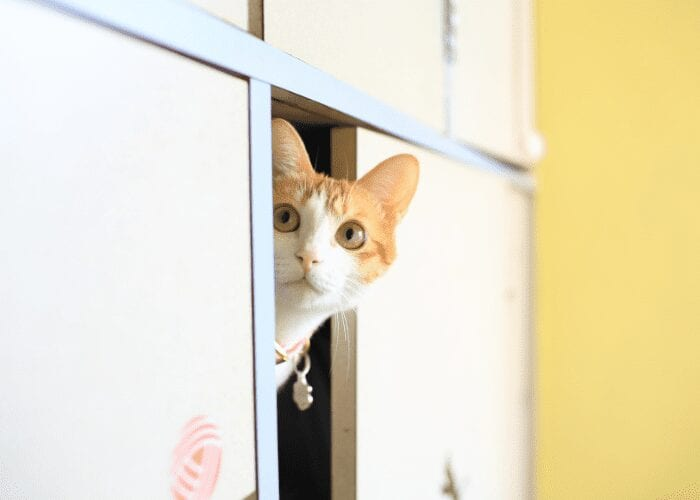 why do cats hide when they aren't feeling well?