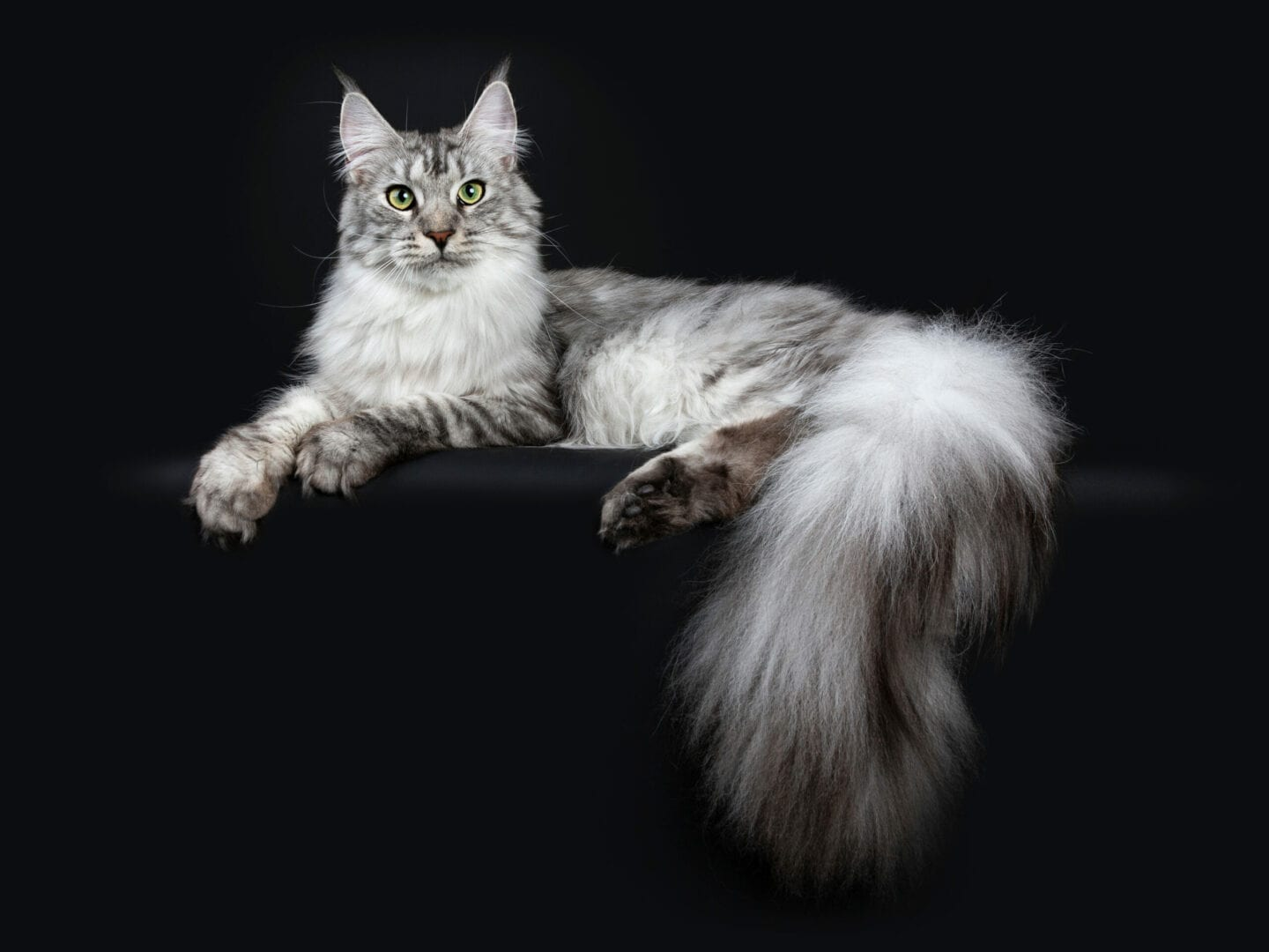 fluffy tails