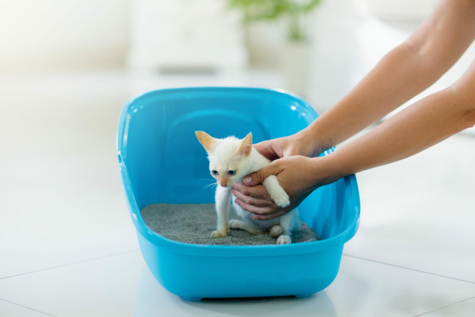 use the litter box