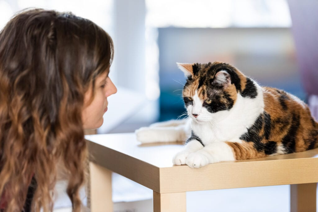 tips for choosing your cat's name