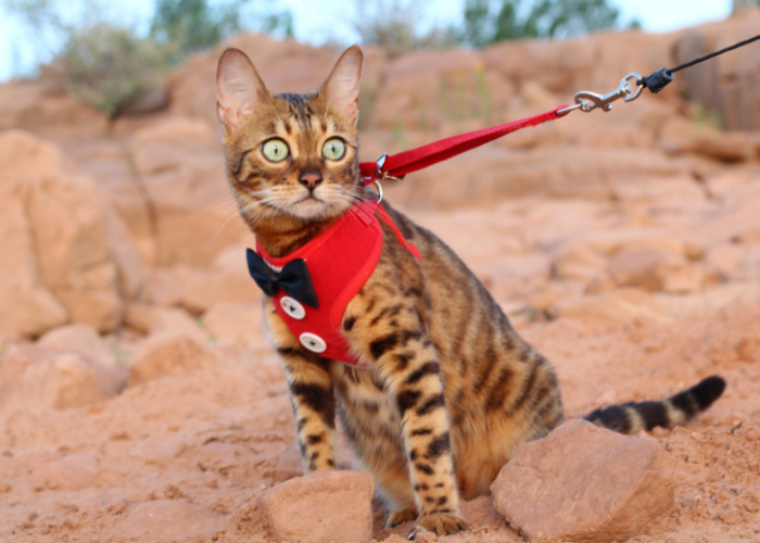 why do cats go limp on leash