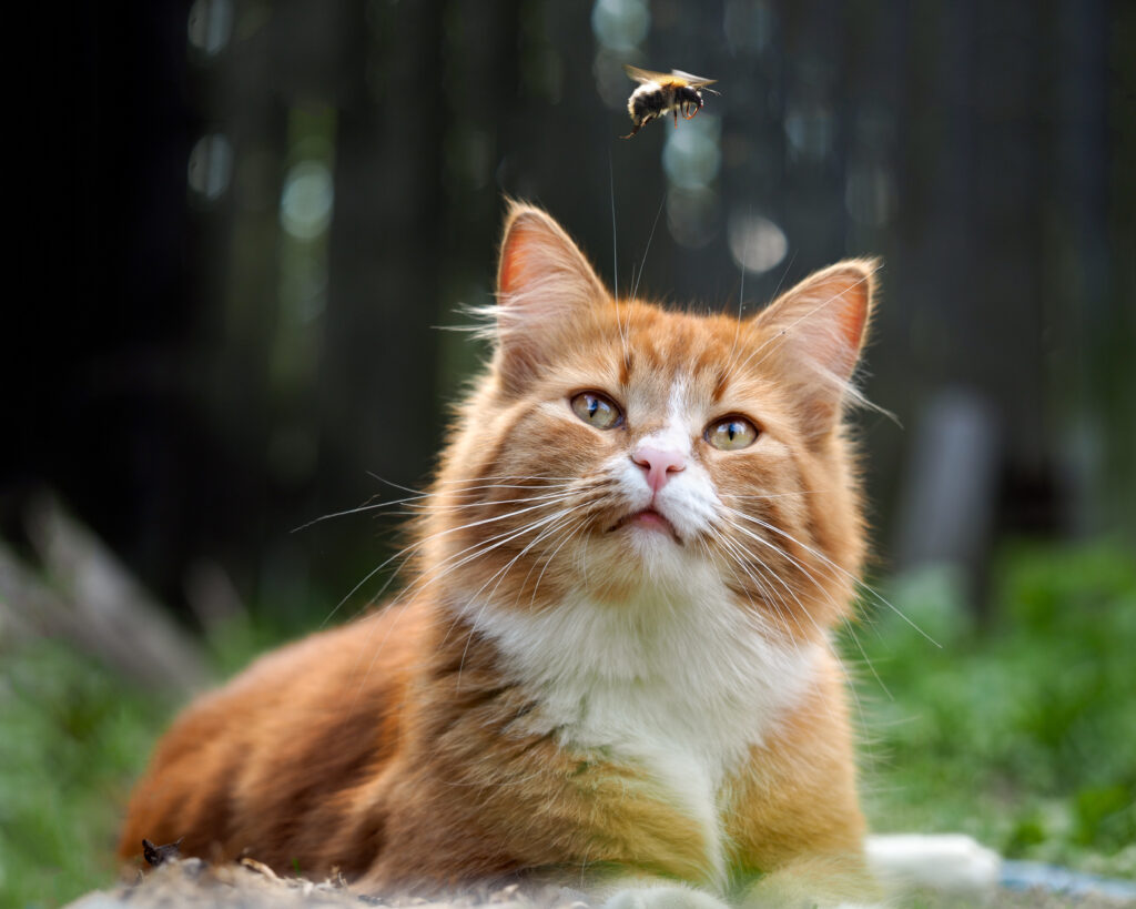 cat stung by a bee