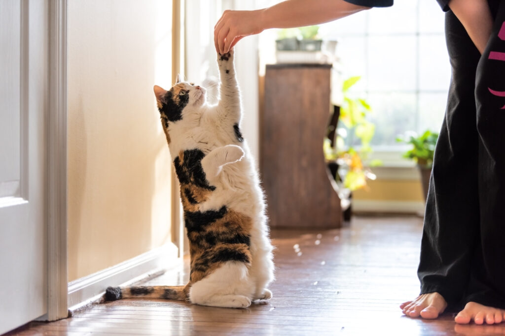positive reinforcement tips for cats
