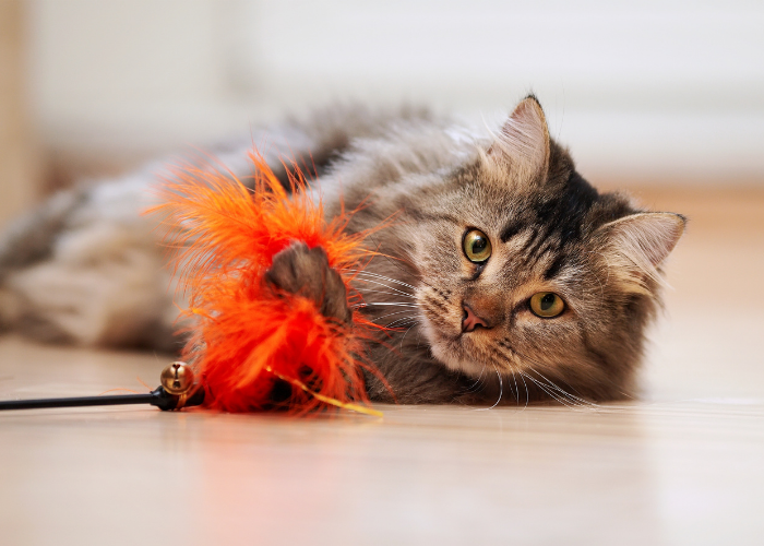 tips to help your cat lose weight