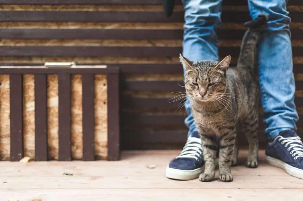 cat rubbing legs