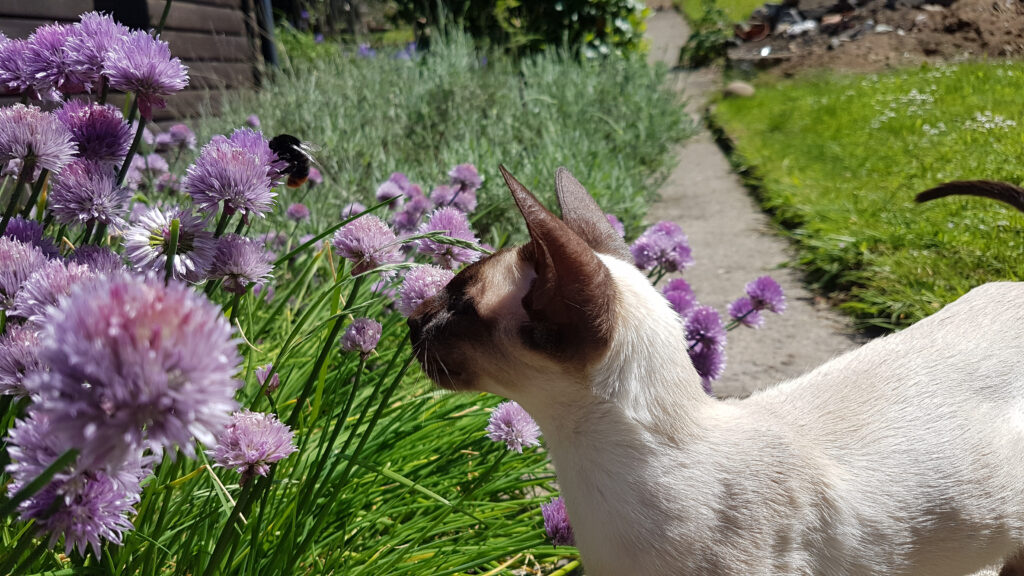 what to do if your cat is stung by a bee