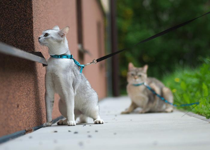 cats go limp on leash