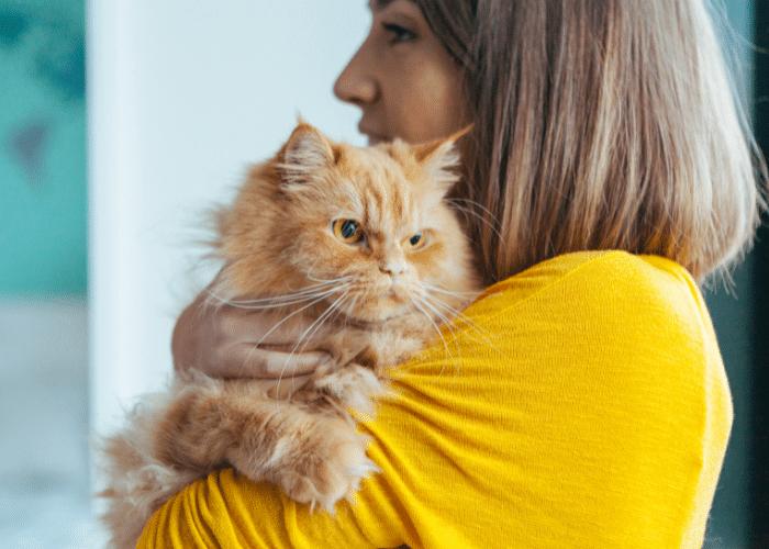 do cats like hugs