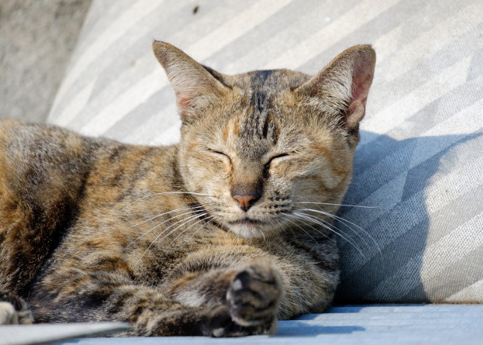 why do cats love to sleep in the sunlight