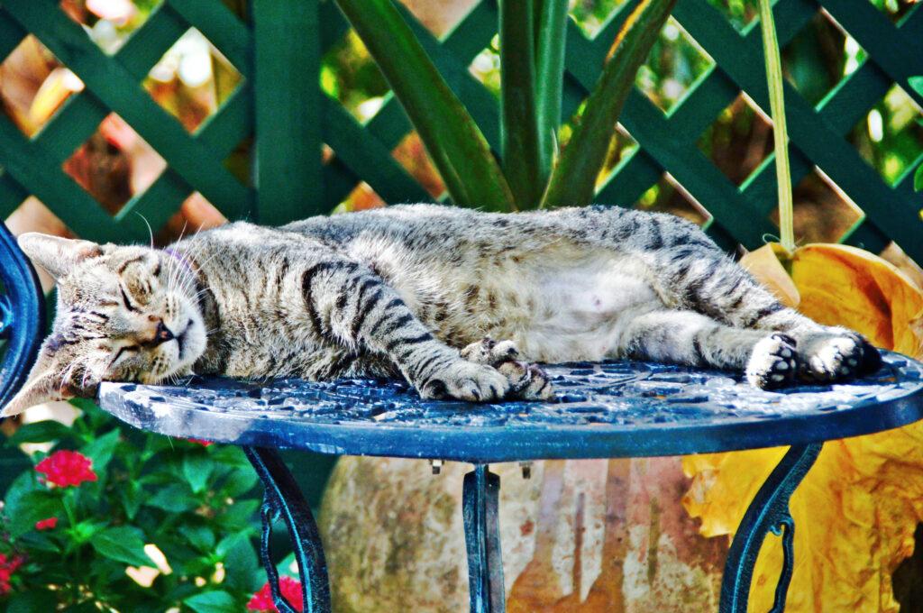 cat-friendly cities