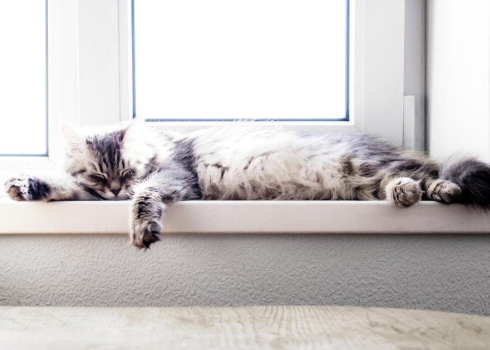why do cats love to sleep in the sunlight?