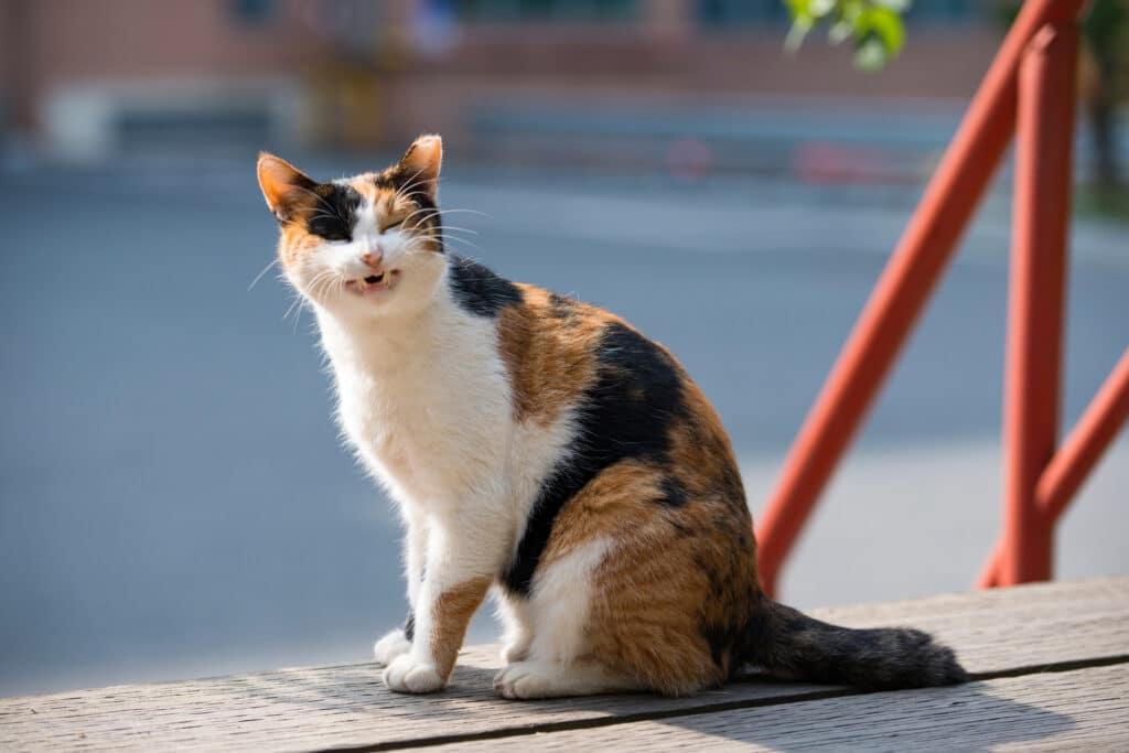 cat wheezing