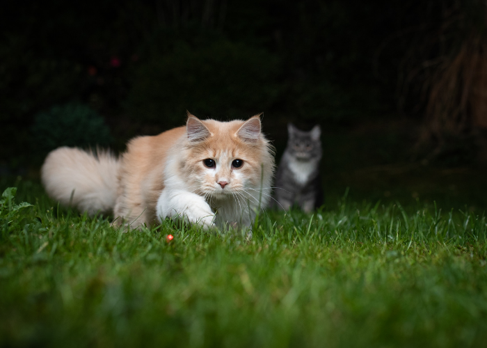 cats hunting