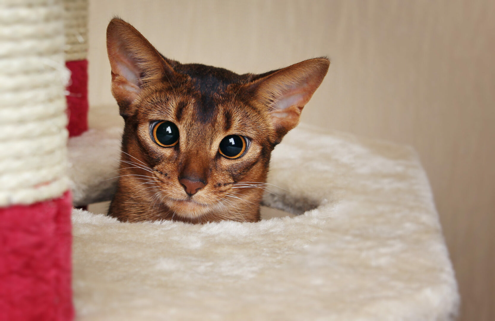 why you should adopt your next cat