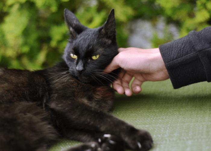 are cats ticklish?