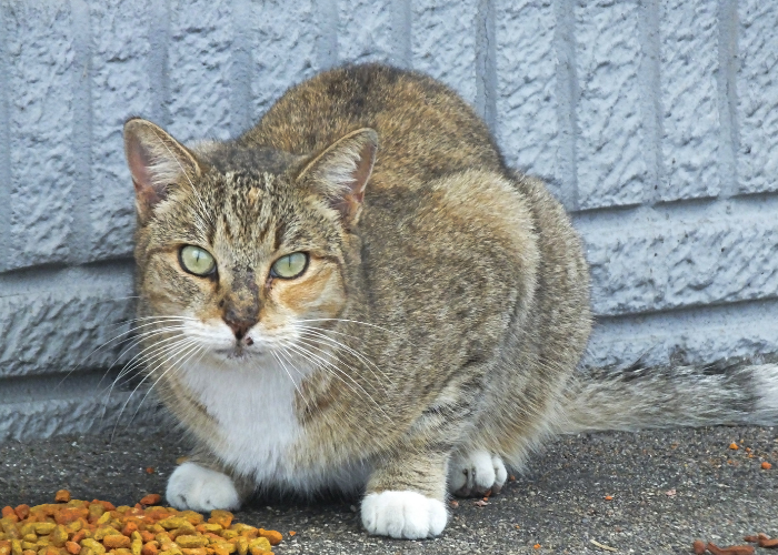 how to earn the trust of a feral cat