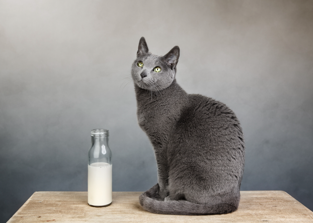 why do cats like milk?