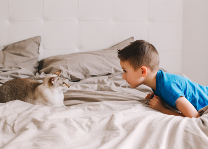why do cats hiss at humans?