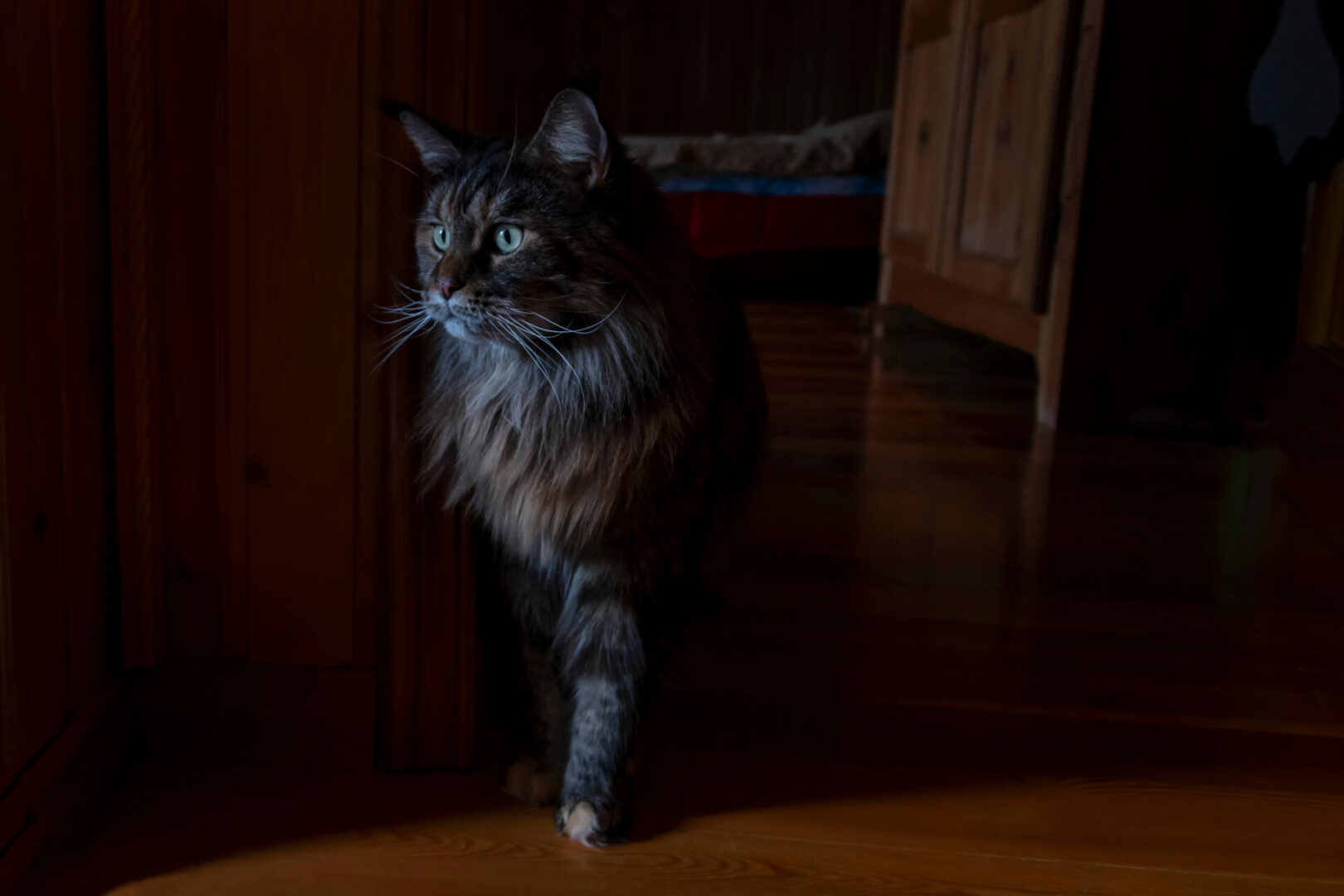 why do cats love the dark?