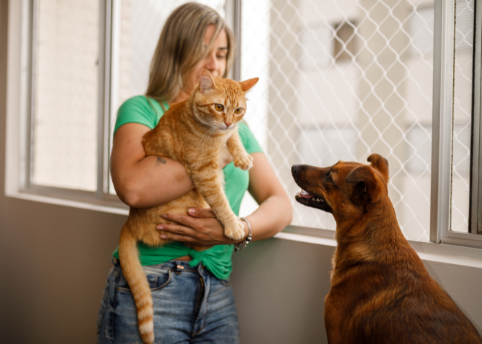 tips for introducing dogs and cats