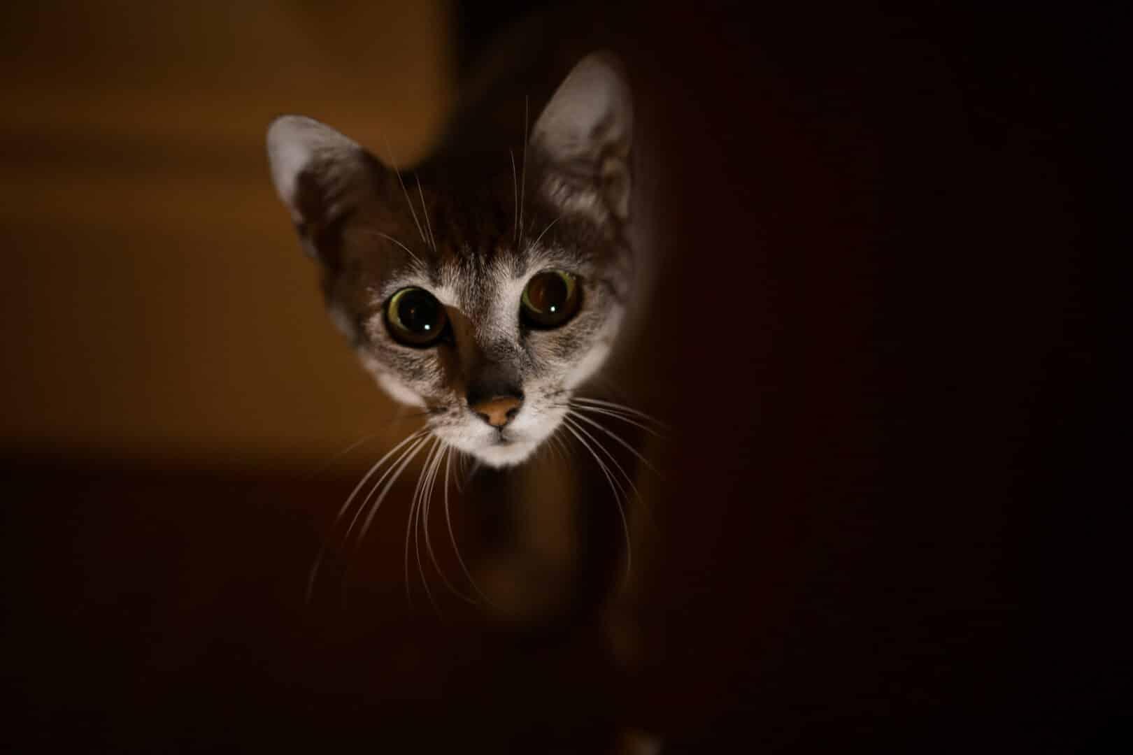 cat walking around at night