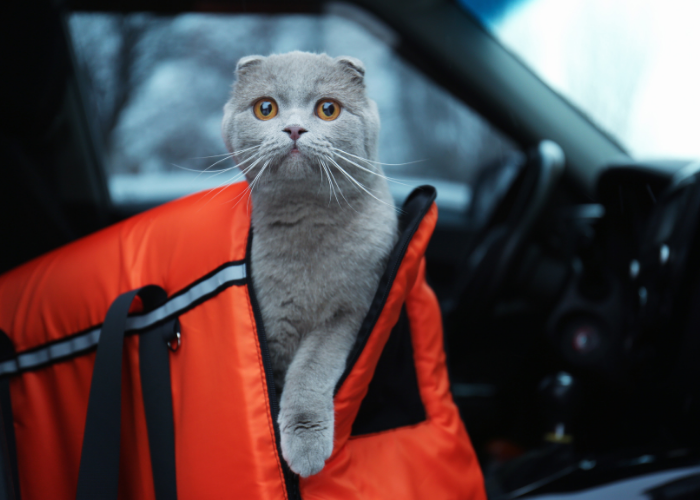 why do cats hate car rides